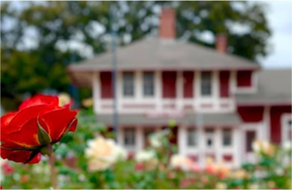 Old red train station in the distance with a variety of colored roses in the foreground